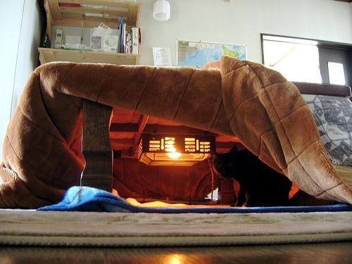 Warm kotatsu