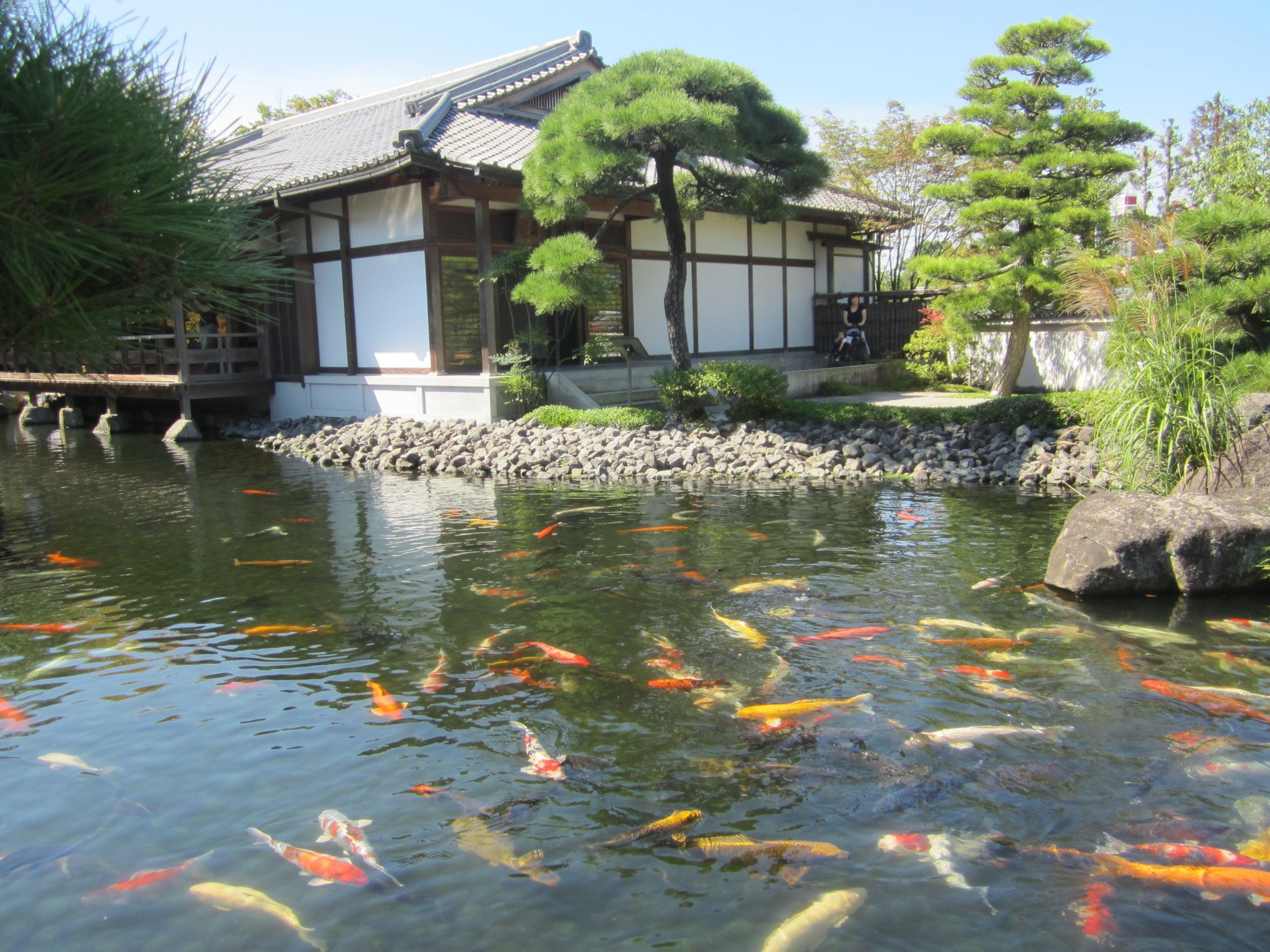 Himeji castle revisited insidejapan blog for Carp pond design