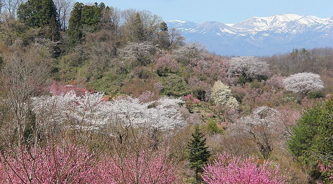 Hanamiyama Park (photo: Japanguide.com)