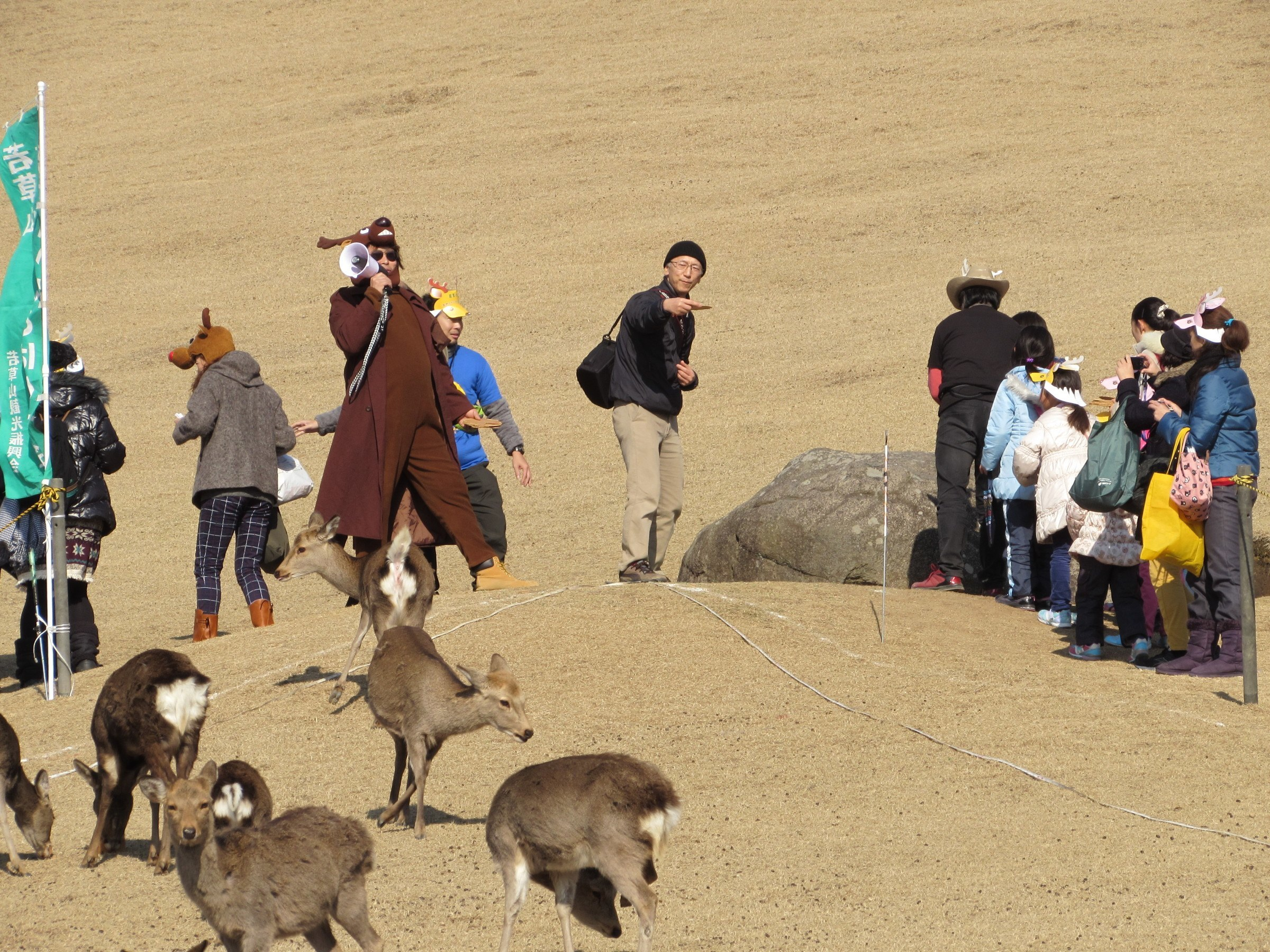... This is the 'Deer Cracker Throwing Tournament'. Hundreds of people line up to throw giant 'Senbei' rice crackers frisbee style to crowds of eagerly awaiting deer. People whose crackers travel furthest are eligible for a prize!