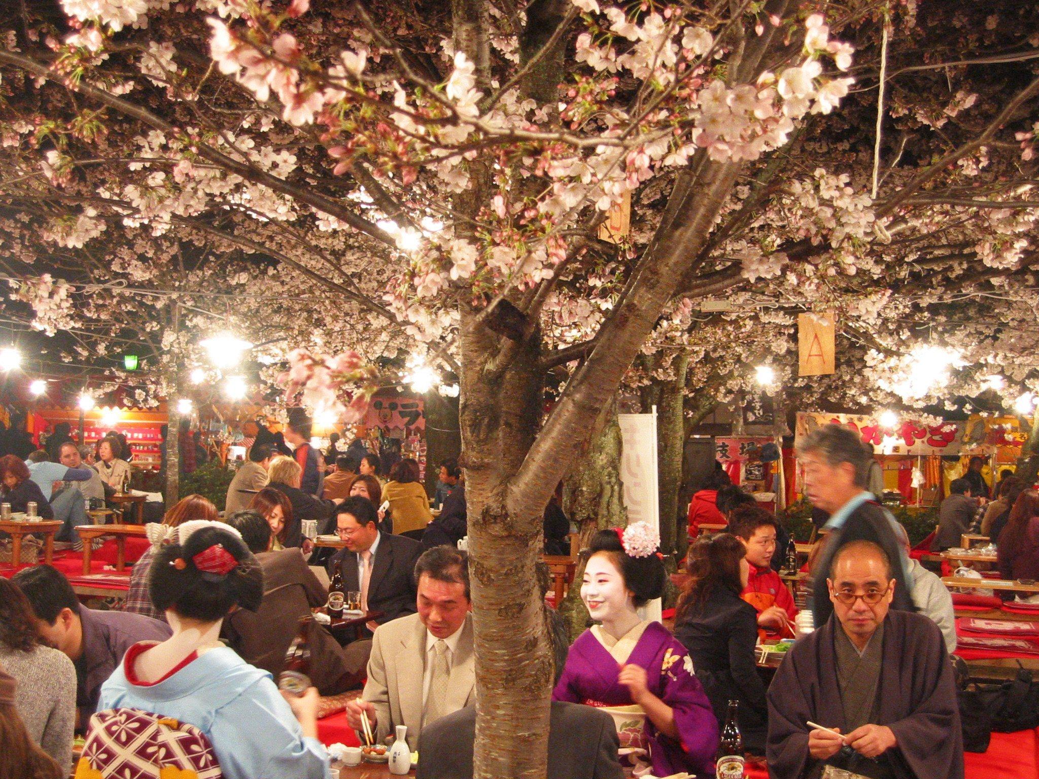 Hanami party with geisha in Kyoto