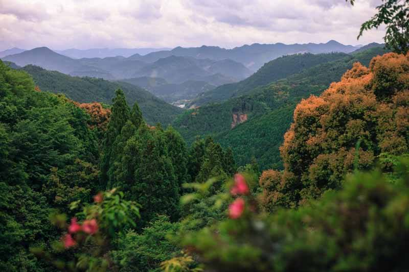 The stunning hills of the Kumano Kodo