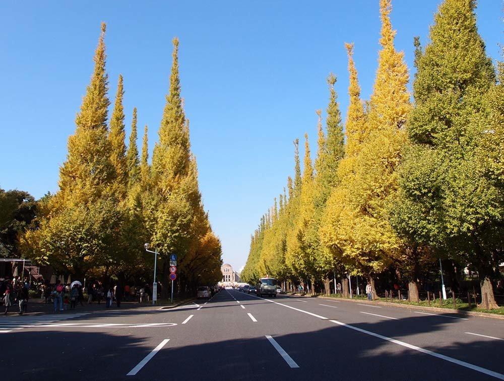 Tokyo's famous Gingko Avenue
