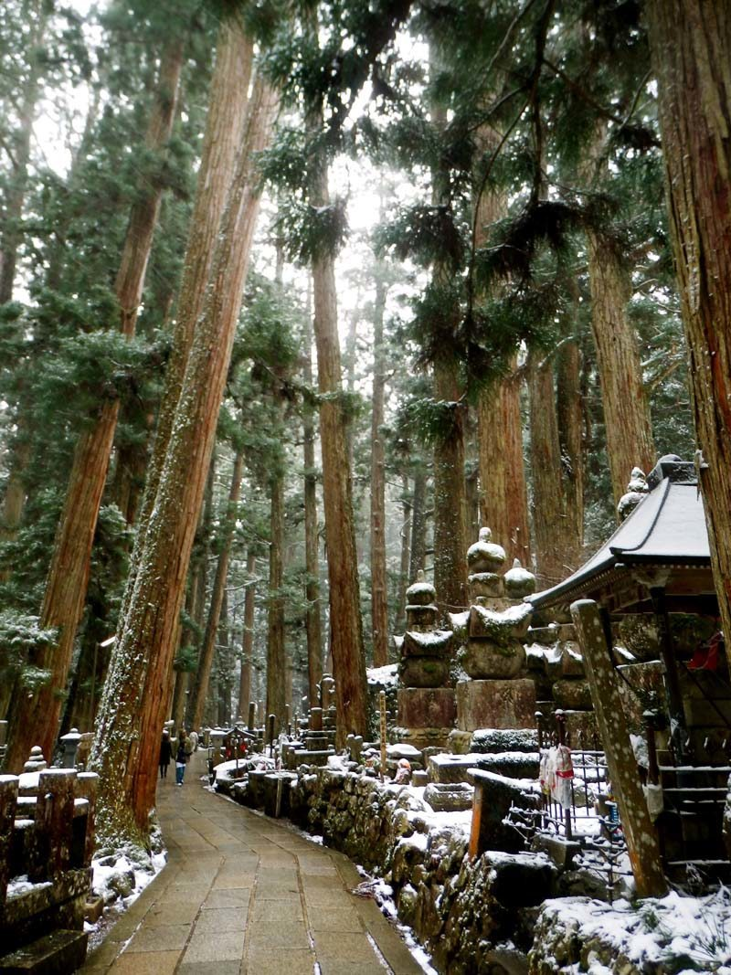 Wandering through the towering cedar forests is a bewitching experience