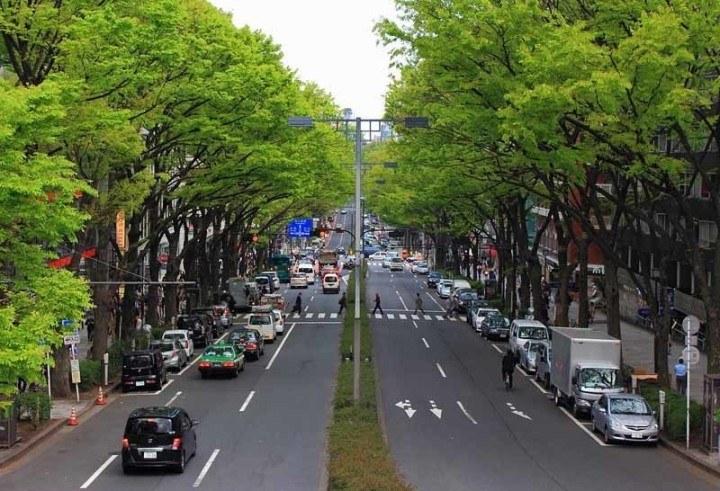Green trees provide cover for Omotesando street in Tokyo