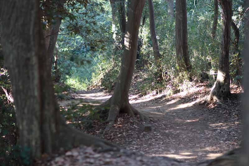 On the Daibutsu hiking course