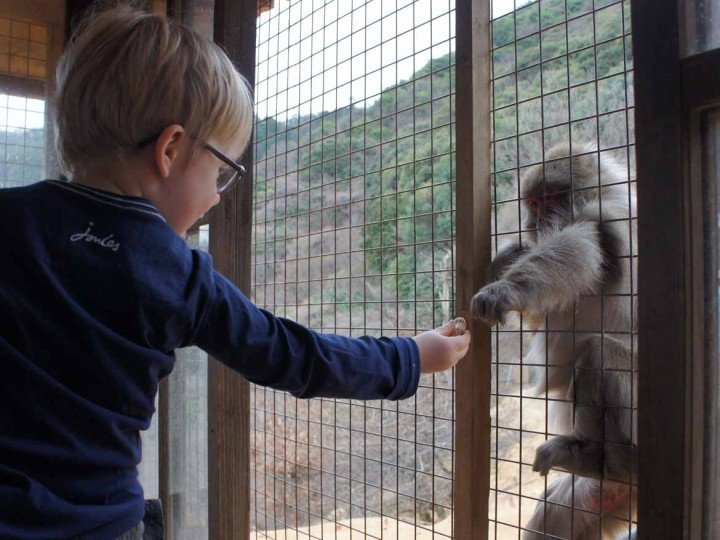 Making friends with monkeys in Arashiyama