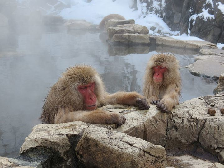 Stuart Timms | Snow Monkeys, Yamanouchi