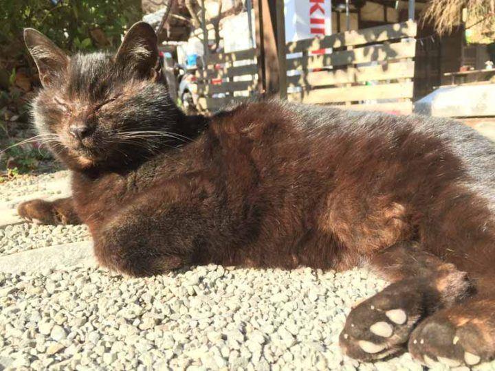 Kamakura Tom enjoying the sun