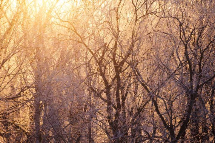 Winter highlights: Sunlight streams through the trees