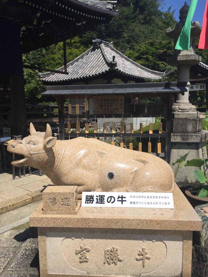 The Lucky Ox