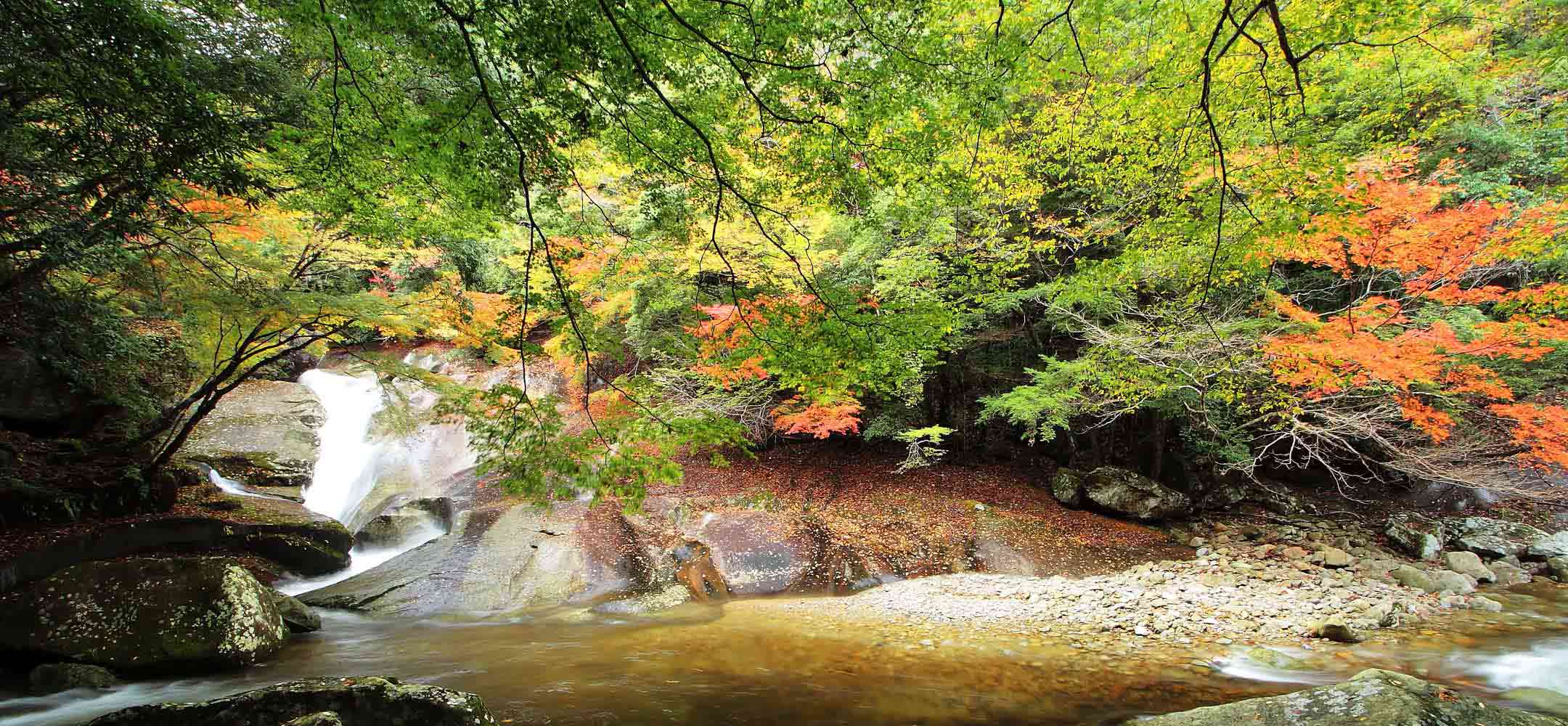 Kochi Shikoku Inside Japan Tours