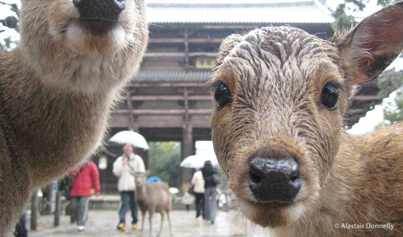 Nara Kinki Inside Japan Tours