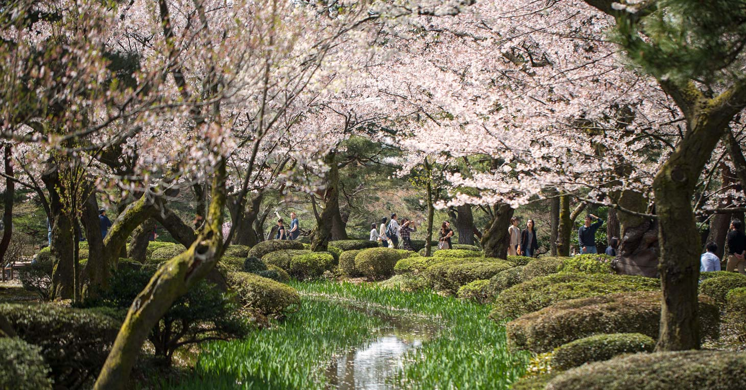 Chase the cherry blossom with InsideJapan Tours