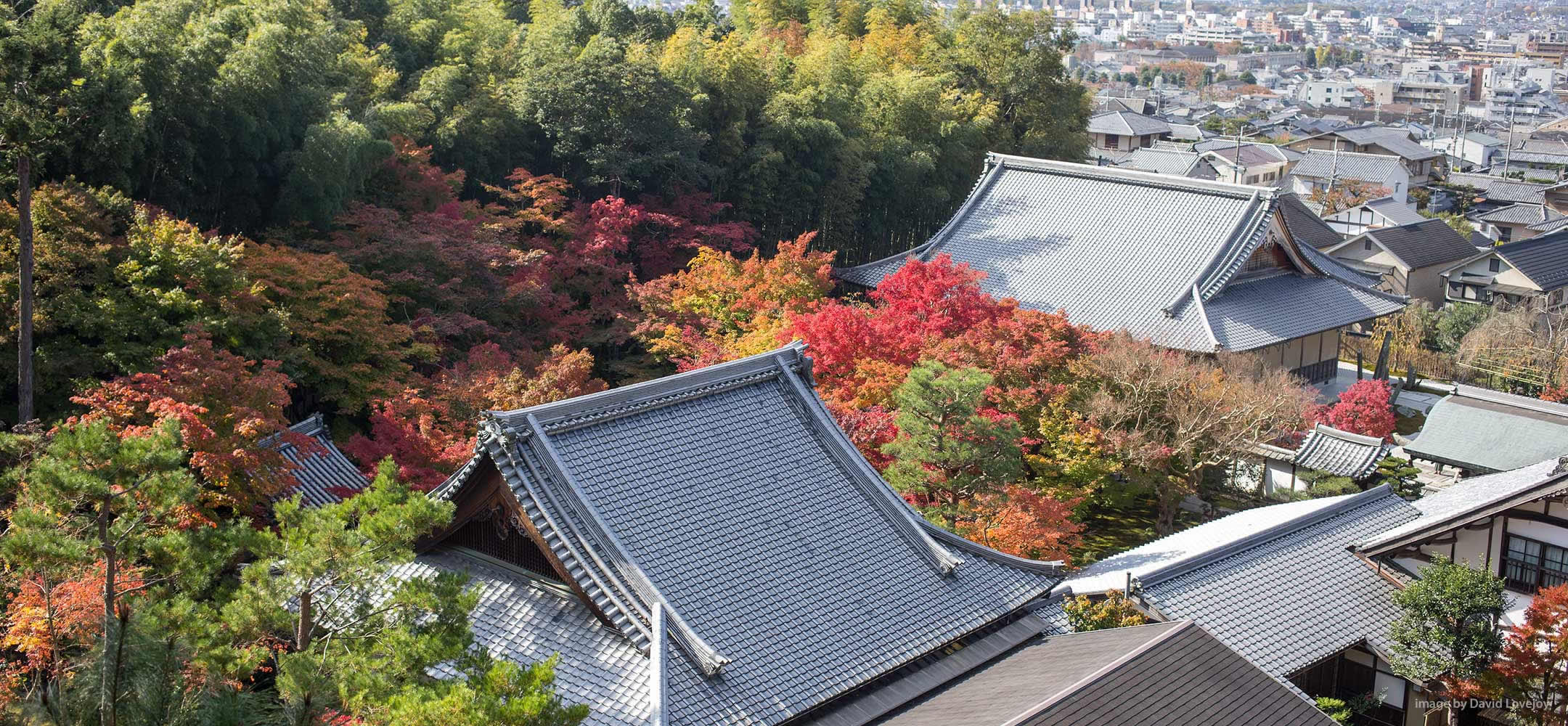 Appreciating Japan's autumn leaf viewing (koyo)