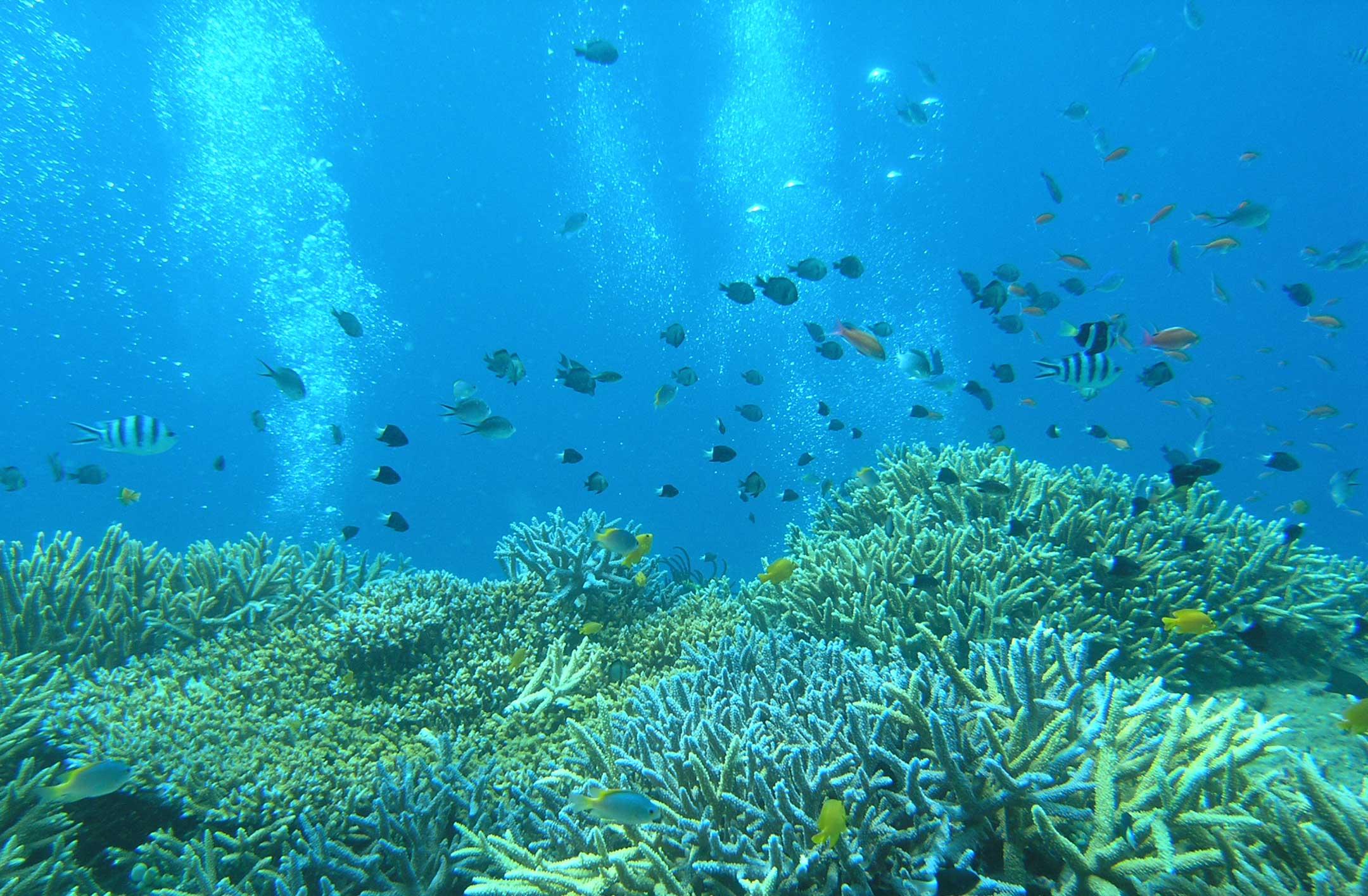 Diving Inside Japan Tours