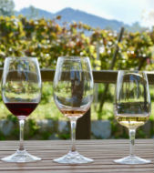 Koshu vineyard tour & wine tasting