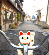 Kyoto cycling city tour