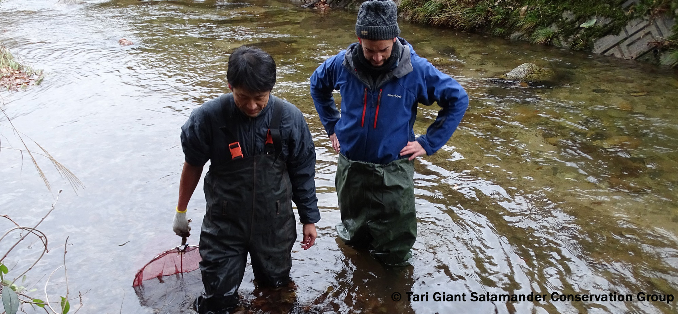 Japanese Giant Salamanders Conservation