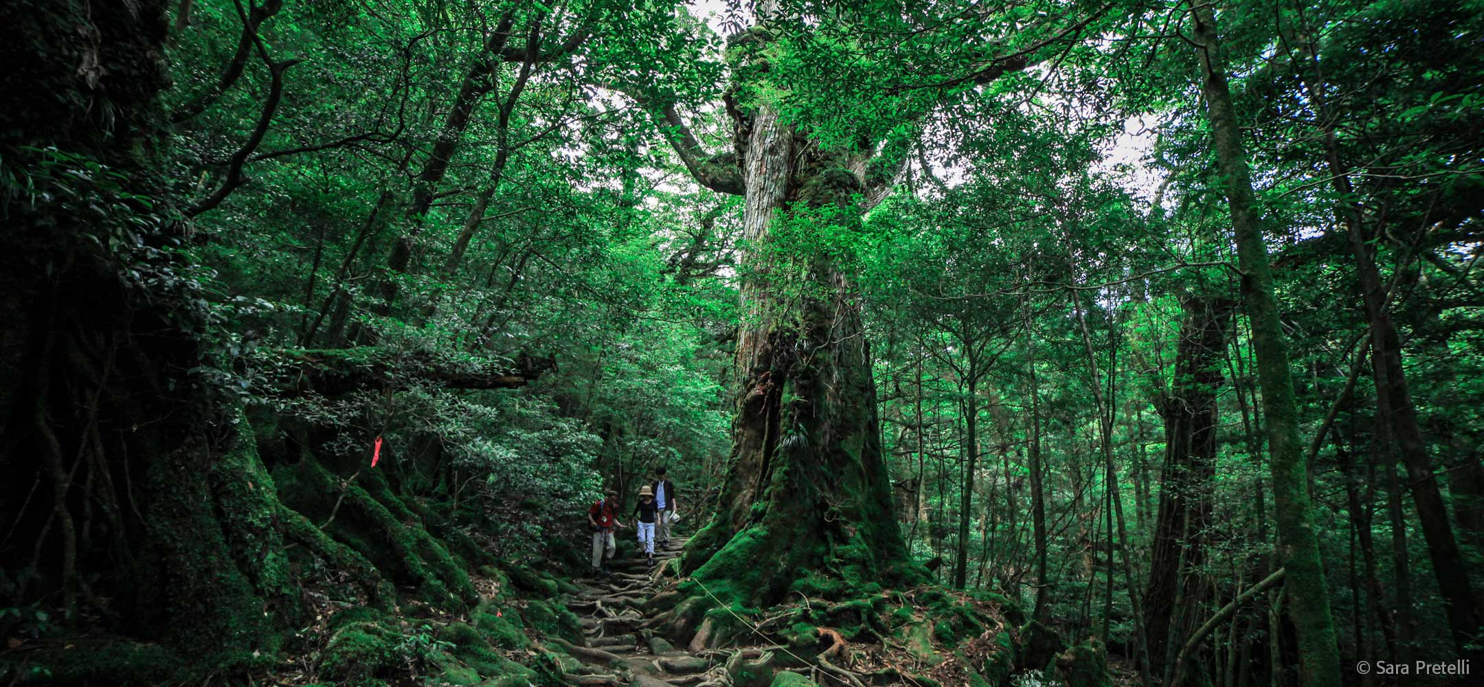 Kumano Kodo Four-Night Module (Intermediate Hiking)