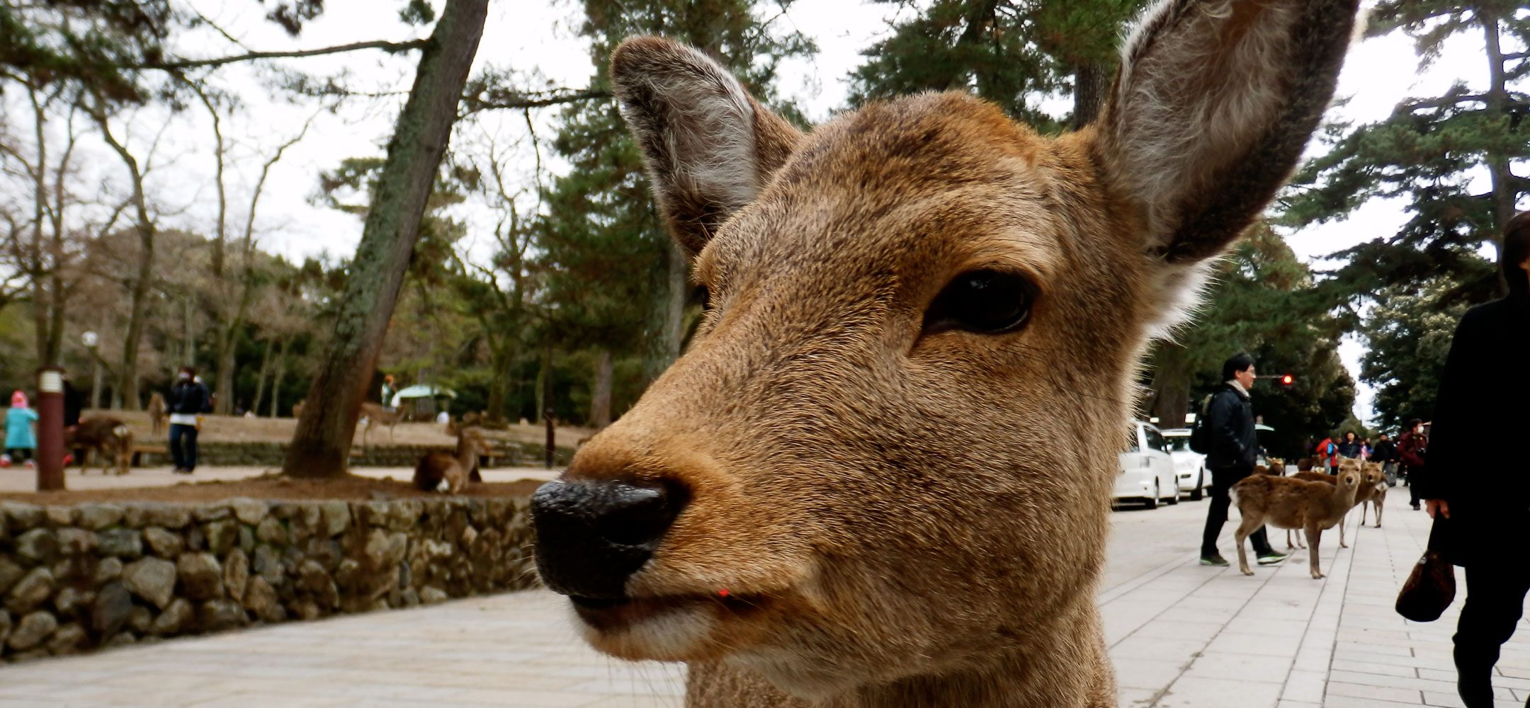 Optional day trip to Nara
